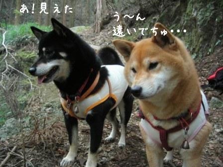 梅とあんひま_f0068501_0207100.jpg
