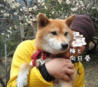 梅とあんひま_f0068501_031186.jpg