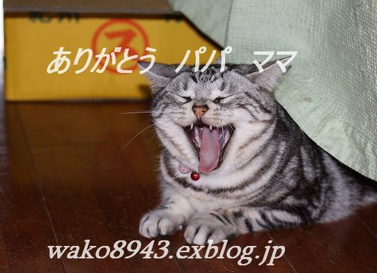 c0187403_1446441.jpg