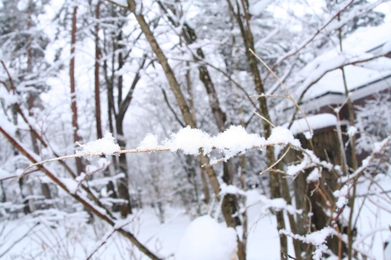 春の雪_f0091207_2323568.jpg