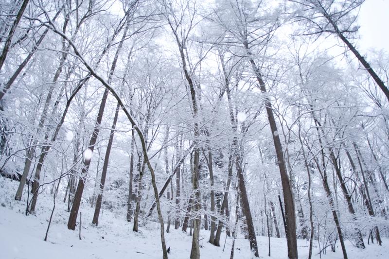 春の雪_f0091207_23313711.jpg