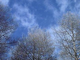 今年の雨氷_f0148927_22224681.jpg