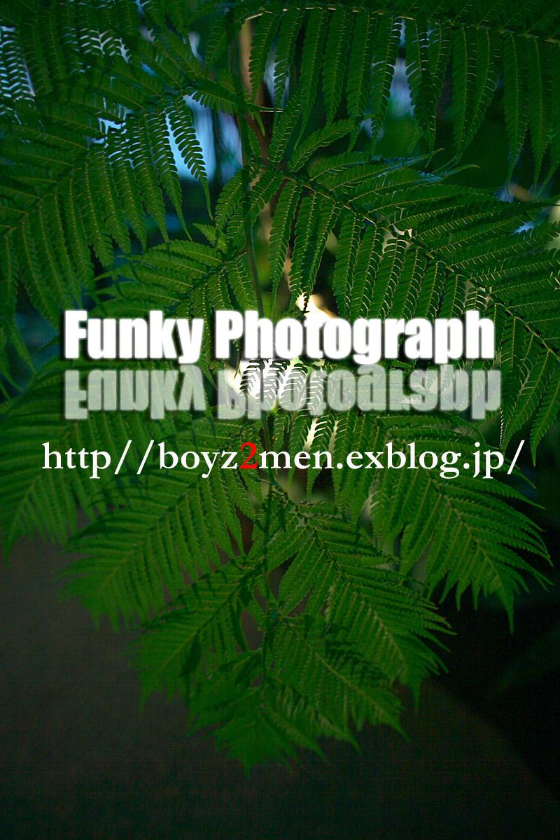 f0031038_013527.jpg