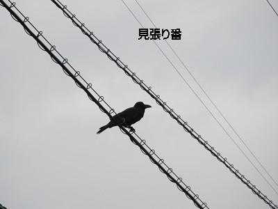 f0003174_17473082.jpg