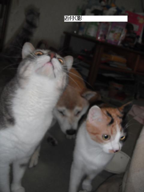 残された猫達も少しずつ平静を取り戻し_b0112380_21113985.jpg