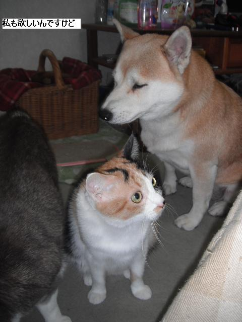 残された猫達も少しずつ平静を取り戻し_b0112380_21121521.jpg