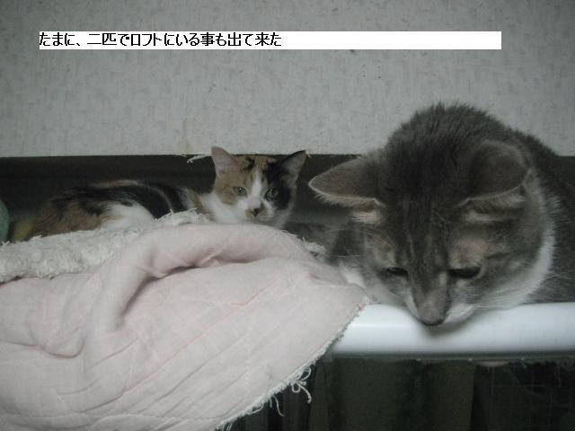 残された猫達も少しずつ平静を取り戻し_b0112380_2172348.jpg