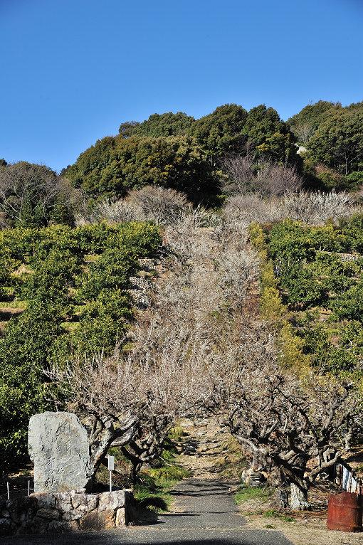 梅の杉山園と長楽寺の梅_e0170058_19375090.jpg