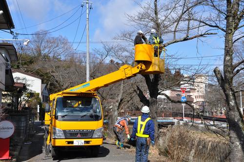 「下の川の桜」保全の作業を行いました_f0226571_13133186.jpg