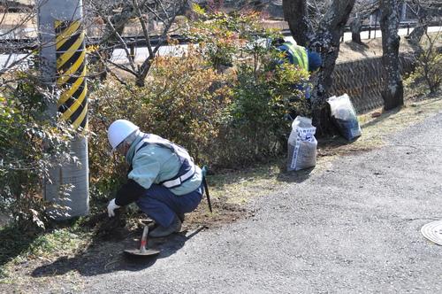 「下の川の桜」保全の作業を行いました_f0226571_13153812.jpg