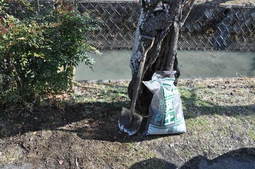 「下の川の桜」保全の作業を行いました_f0226571_13163852.jpg