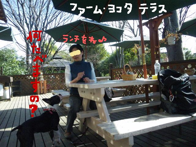 ファーム・ヨコタとビバひな祭り★_d0187891_230766.jpg
