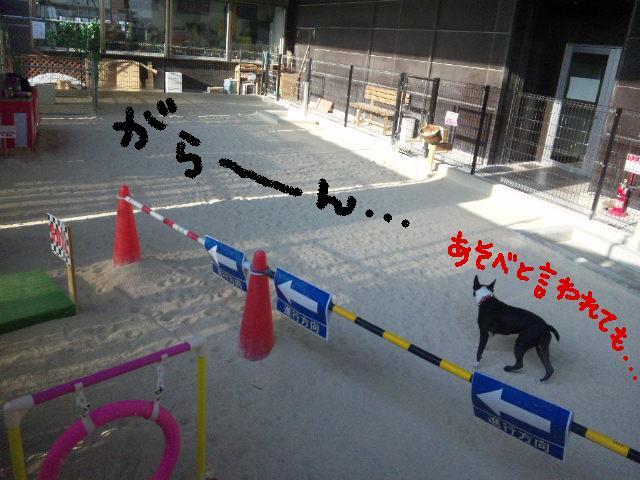 ファーム・ヨコタとビバひな祭り★_d0187891_2313640.jpg