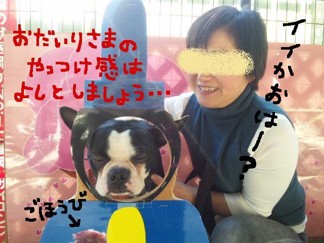 ファーム・ヨコタとビバひな祭り★_d0187891_2321895.jpg