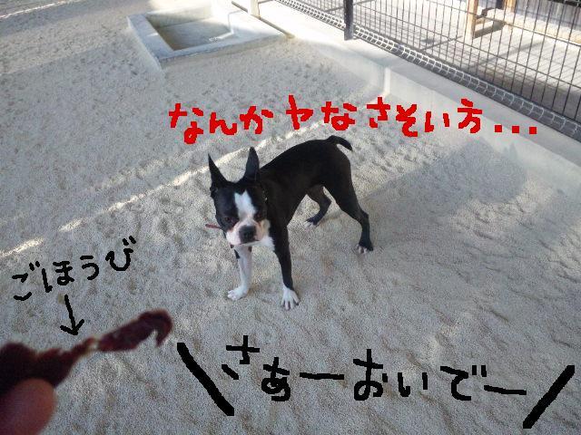 ファーム・ヨコタとビバひな祭り★_d0187891_2323136.jpg