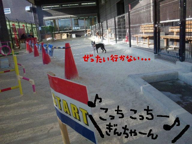 ファーム・ヨコタとビバひな祭り★_d0187891_2324023.jpg