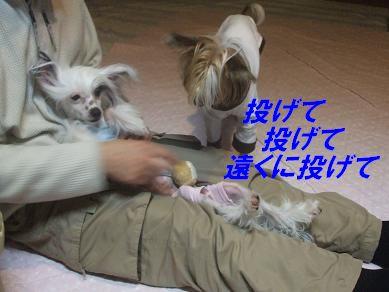 f0179203_6484288.jpg