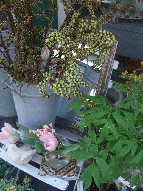 オークリーフ(春の花木と河津桜)_f0049672_16154352.jpg