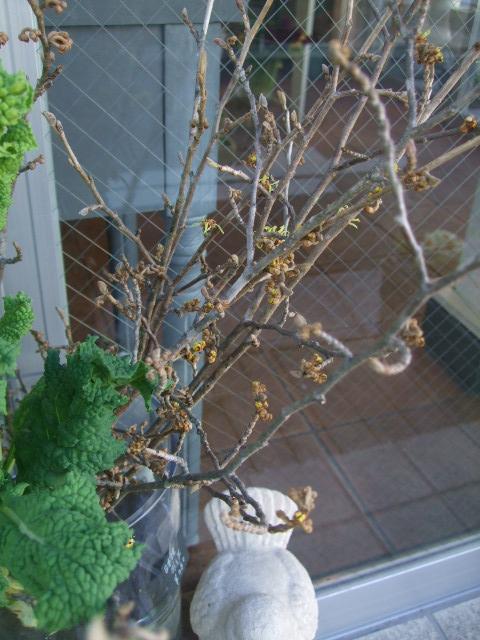 オークリーフ(春の花木と河津桜)_f0049672_16155162.jpg