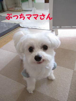 b0193480_15544350.jpg