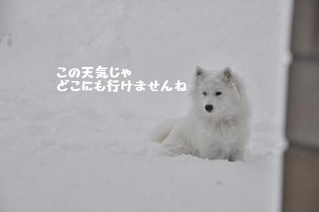 f0212597_5443688.jpg