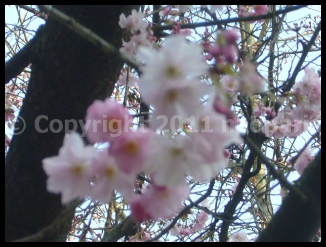 【パリ】Jardin du Luxembourgリュクサンブルグ公園3月4日(PARIS)_a0008105_20375598.jpg