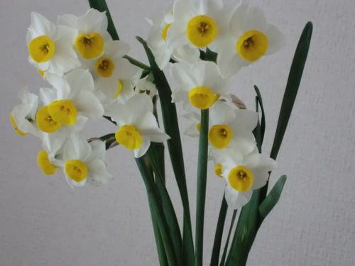 春の指針_c0185356_15151052.jpg