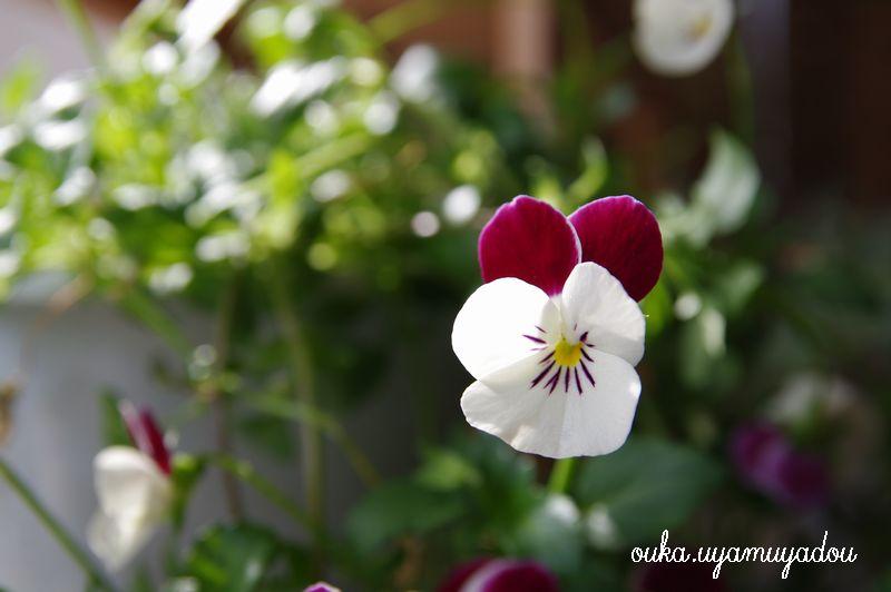 穏やかな春の陽ざし_a0157263_04817100.jpg