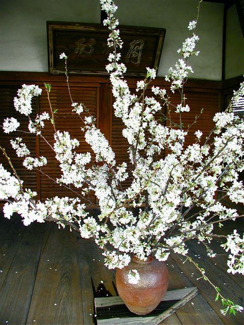「桜の会&10周年記念感謝祭」_f0170519_23554965.jpg