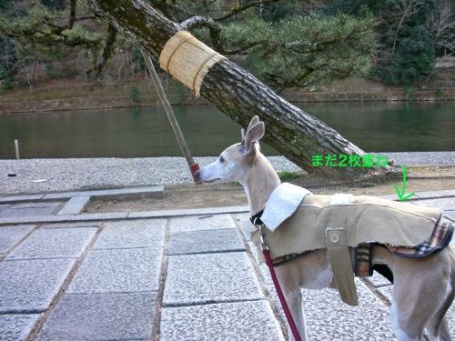 お散歩_a0197730_23181083.jpg