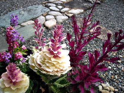 シクラメンが咲きました_e0134835_13404737.jpg