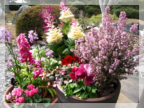 シクラメンが咲きました_e0134835_1341988.jpg