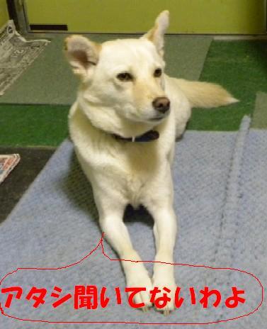 b0201756_22465270.jpg