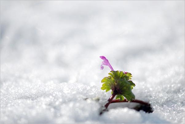 春の雪_c0091505_18223310.jpg