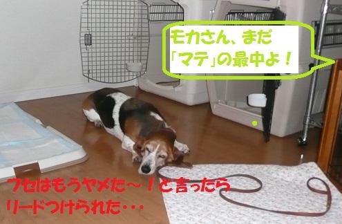 f0121712_15473332.jpg