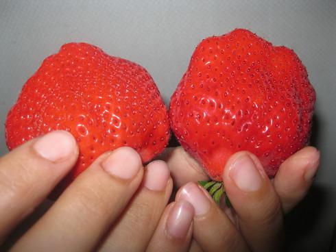 オーガニック「天然かき氷シロップ イチゴ」作り~_a0125419_15375792.jpg