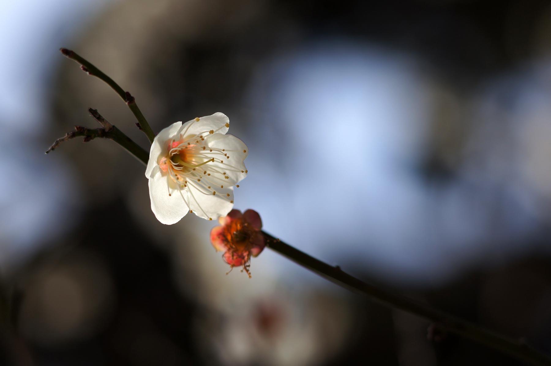 spring_e0216133_075067.jpg
