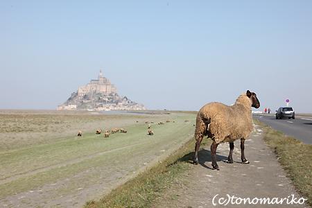 モンサンミッシェルの羊ちゃん_c0024345_2233421.jpg
