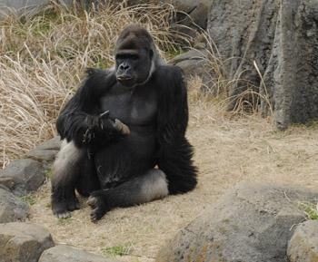 動物園!_a0028350_16191256.jpg