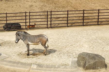 動物園!_a0028350_1619465.jpg