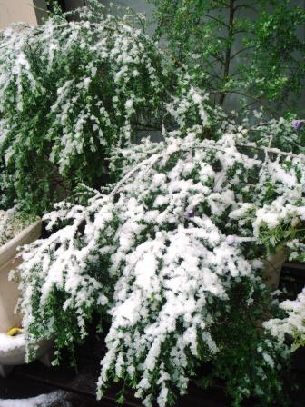 3月の雪_a0163160_11162634.jpg