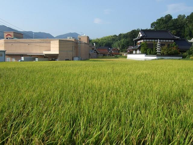 熊野町にある、2つの龍王神社 その2 龍王神社(御旅所) _b0095061_1611762.jpg