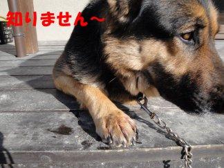 b0113663_8314673.jpg