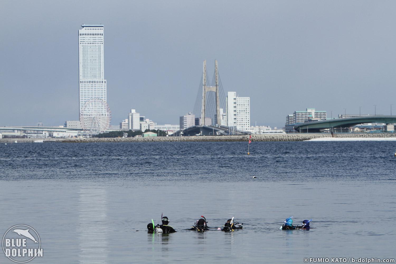 3/4 せんなん里海公園アマモ移植_e0201269_13131860.jpg