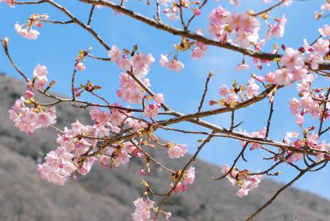 春と冬が行ったり来たり_d0091671_11253531.jpg
