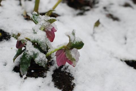 春と冬が行ったり来たり_d0091671_11492927.jpg
