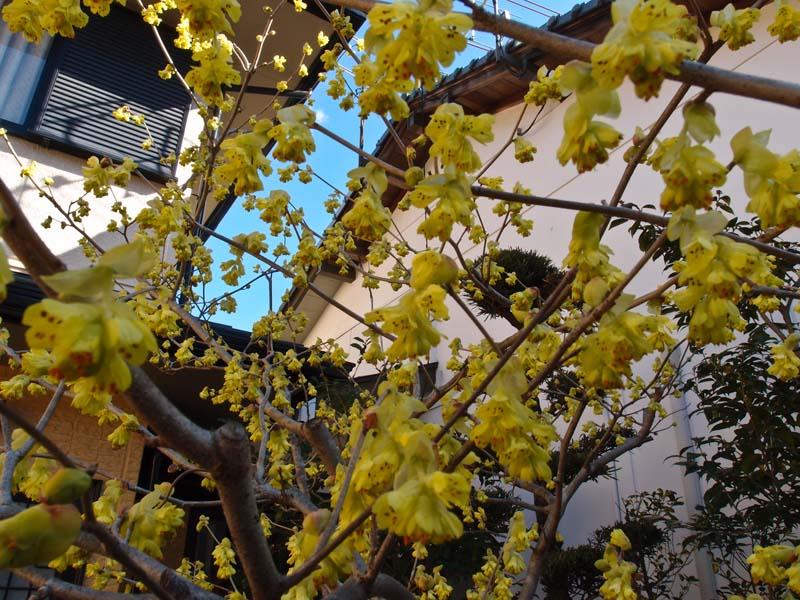 春が近いのに、、、寒い_d0127876_2384876.jpg