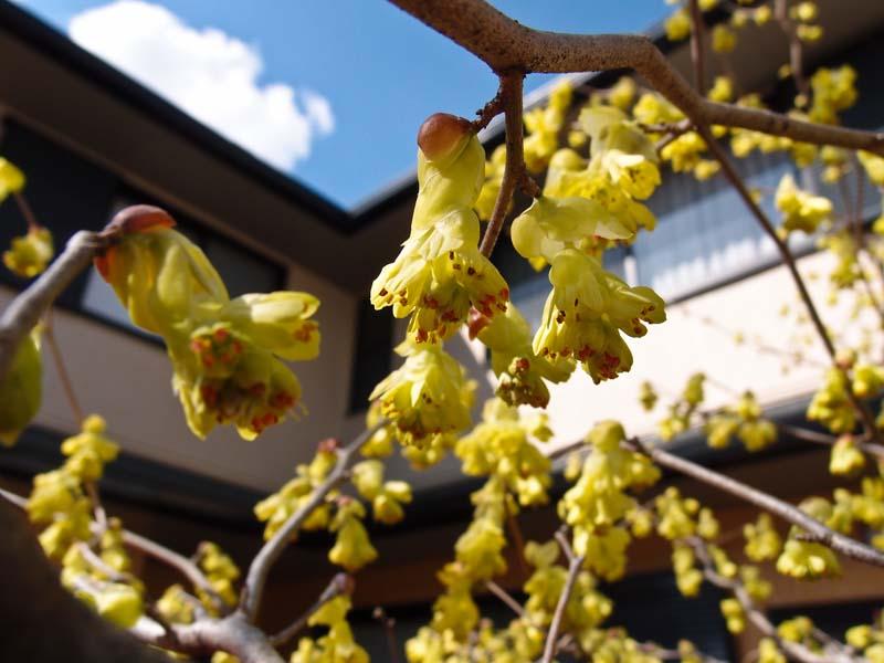 春が近いのに、、、寒い_d0127876_2384912.jpg