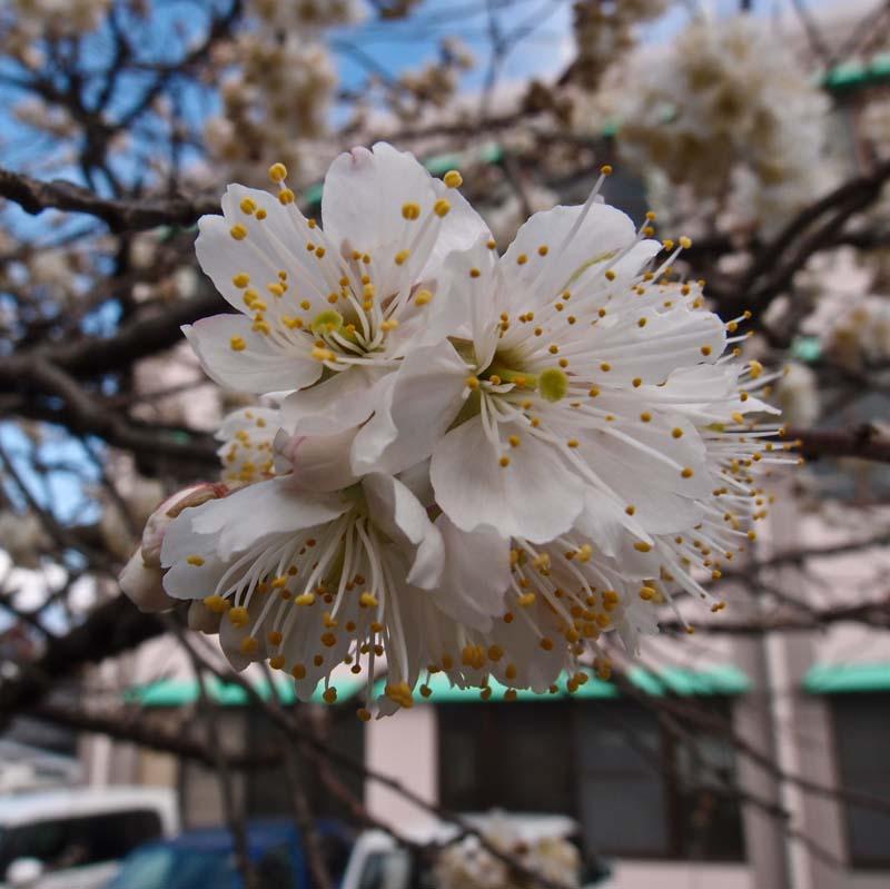 春が近いのに、、、寒い_d0127876_2385361.jpg