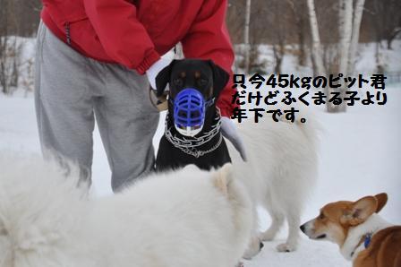 f0212597_8441916.jpg